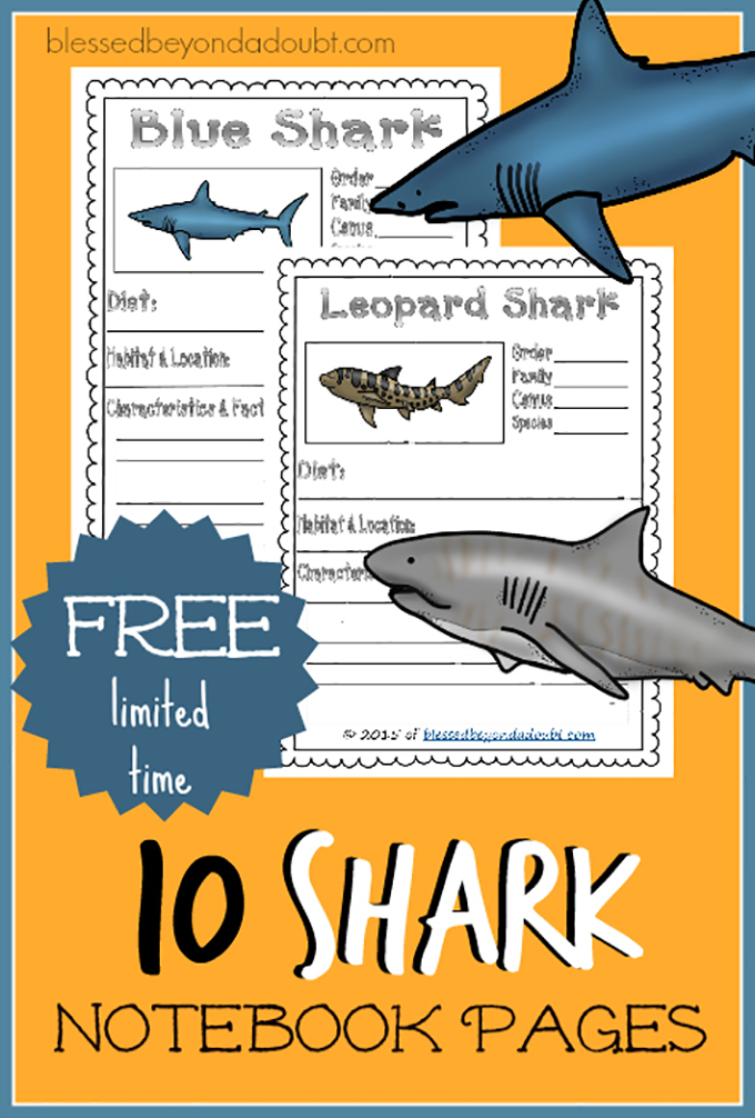 shark-notebook-pages