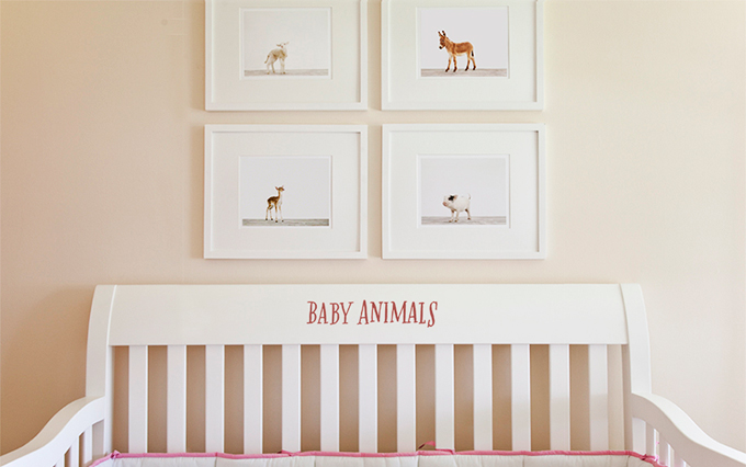 baby animals for the nursery
